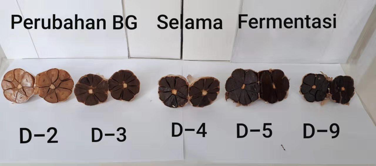 black garlic colour change